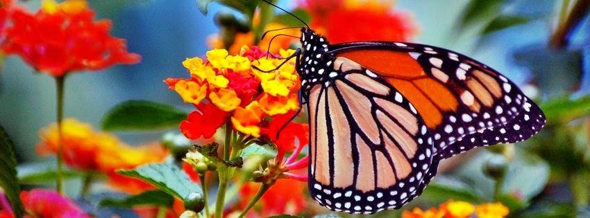 """Résultat de recherche d'images pour """"nature insolite de papillon"""""""