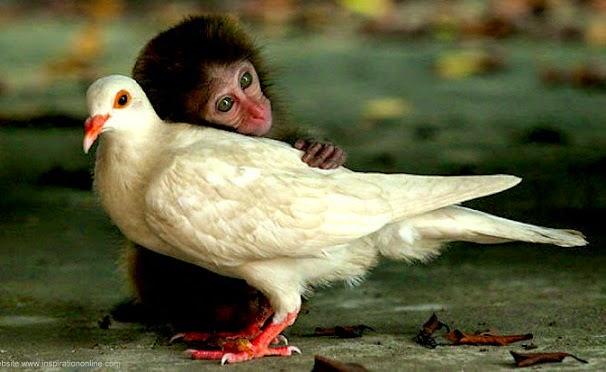 monyet+dan+merpati.jpg (606×372)