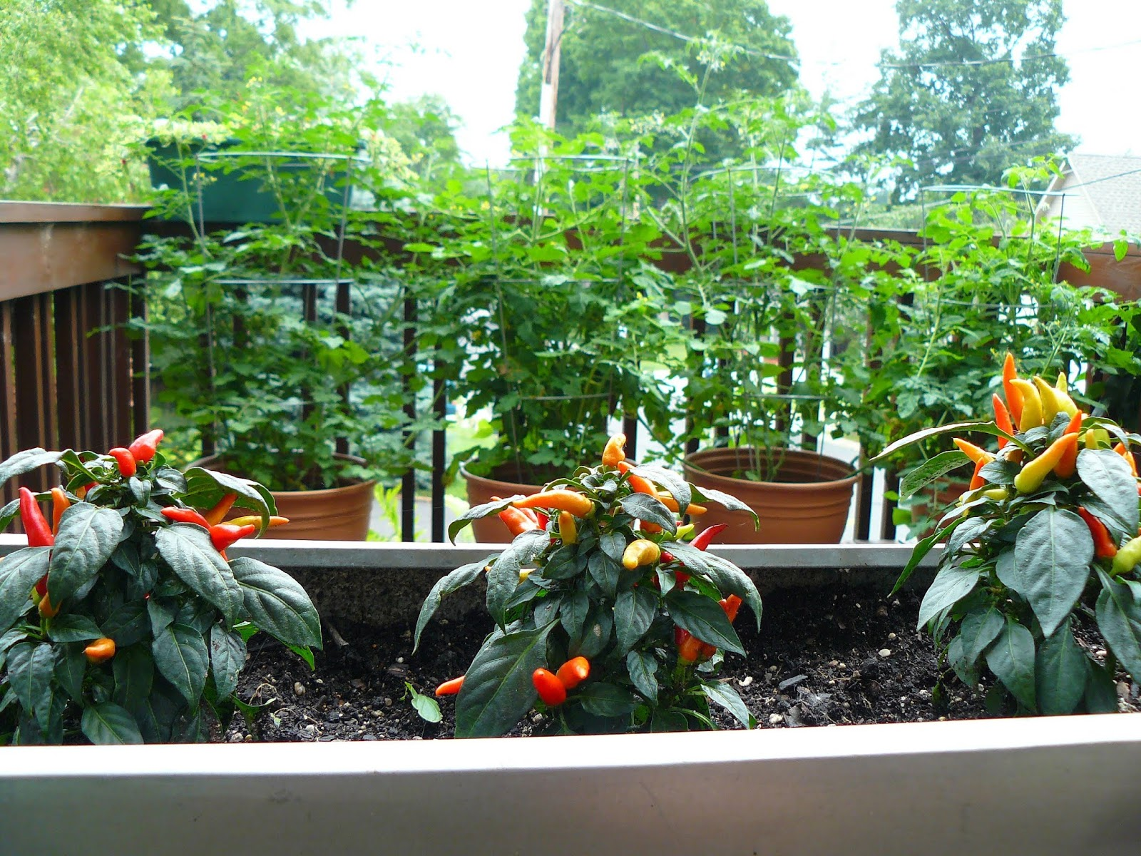 tips for successful container vegetables