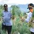 Bupati Agam  Turun Langsung Ke Lahan Pertanian Masyarakat