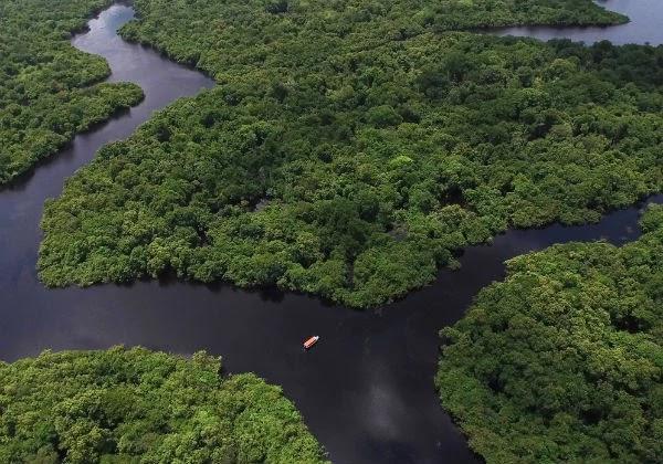 Segundo a Svenja Schulze, o forte aumento do desmatamento na Amazônia brasileira seria o principal motivo para o desinteresse no investimento de R$ 155 milhões