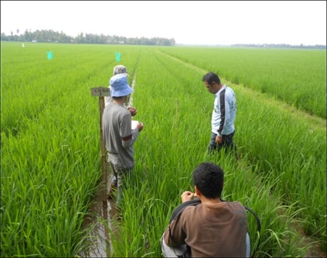 6.069 Tenaga Harian Lepas - Tenaga Bantu Penyuluh Pertanian Akhirnya Diangkat