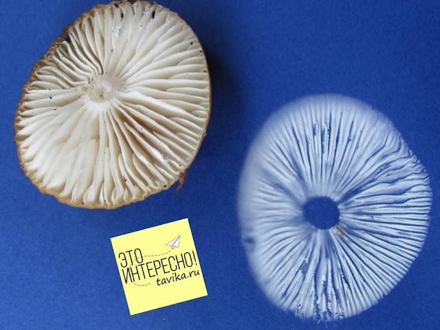 летнее занятие для детей: делаем портрет гриба