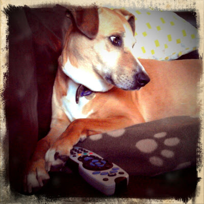 Dog with remote conrtrol