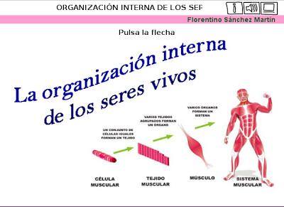 http://cplosangeles.juntaextremadura.net/web/edilim/tercer_ciclo/cmedio/los_seres_vivos/organizacion_seres_vivos/organizacion_seres_vivos.html