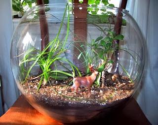 Lounge Insight Apa Itu Terarium Terrarium