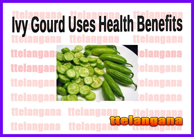Ivy Gourd Uses Health Benefits