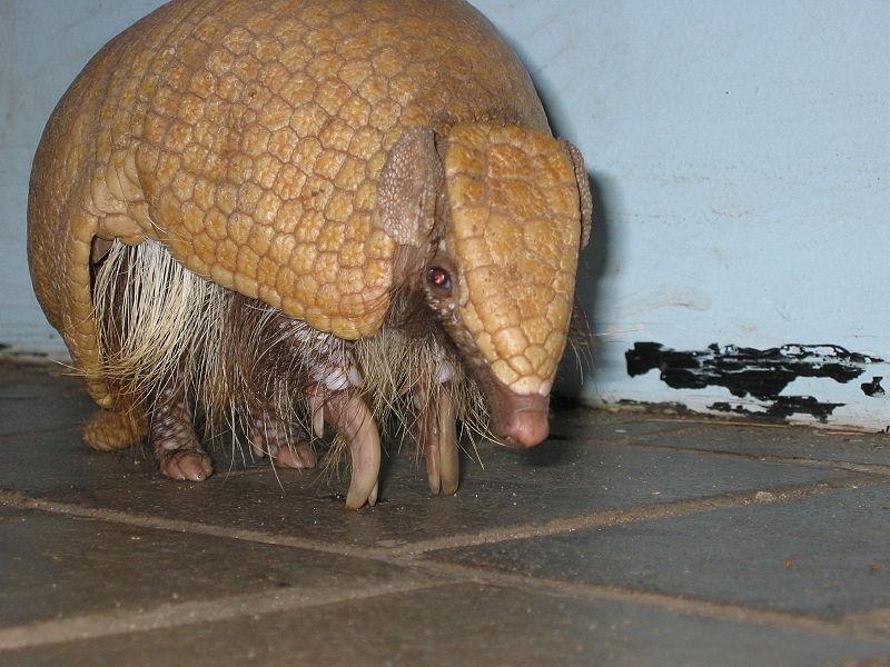 Veterinario Exóticos: VETEX.Centro.Veterinario. Animales.Exóticos.Barcelona: NO