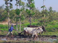 Kesbangpol Tuban, Penjaga Stabilitas Sosial Politik termasuk Bektiharjo