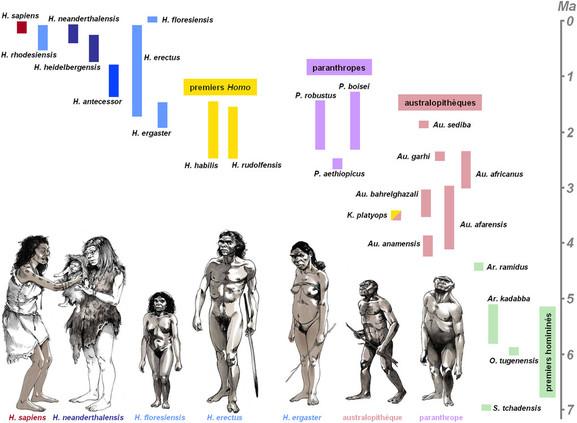 Natural Selection Modern Humans