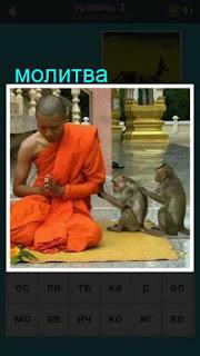 монах сидя на коленях молится, а рядом обезьяны сидят так же