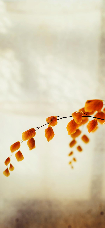 خلفية أوراق الغصن الذهبية وقت الخريف