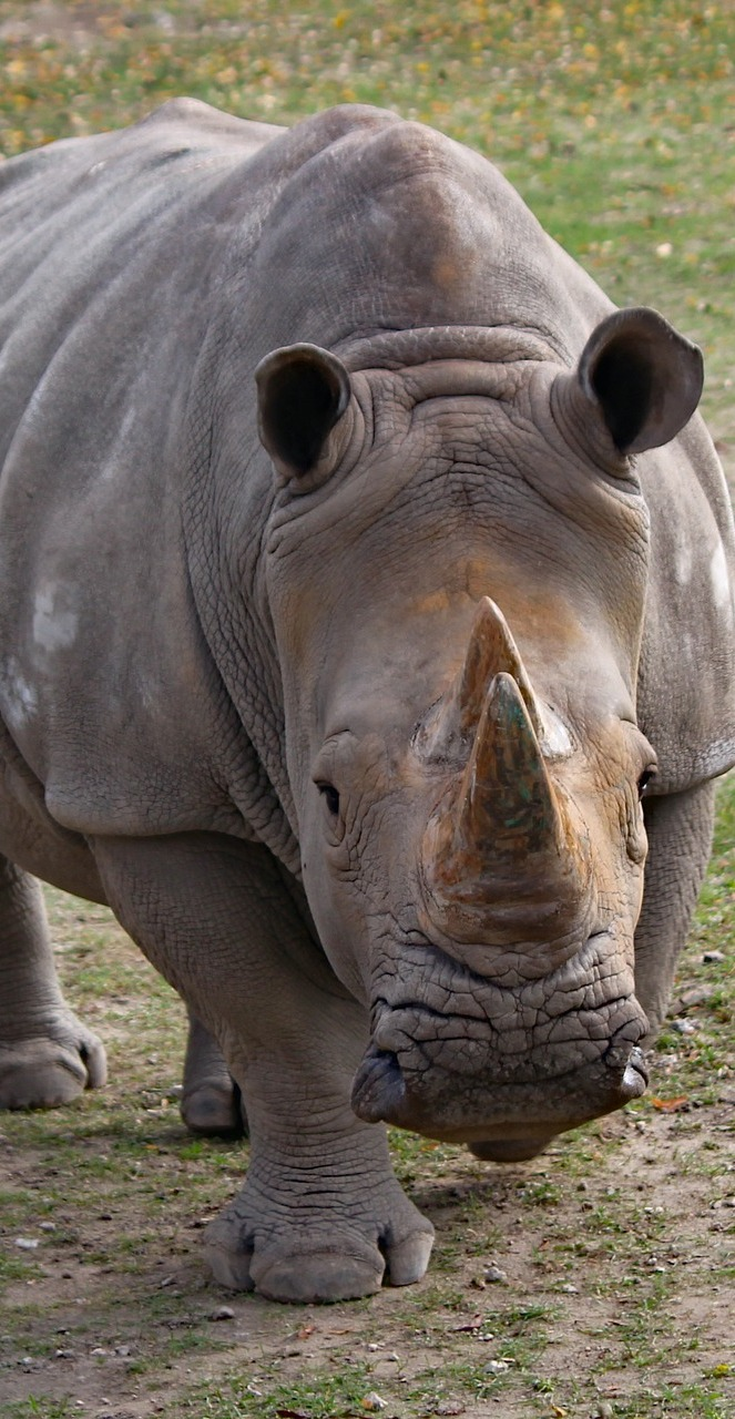Photo of a rhinoceros.