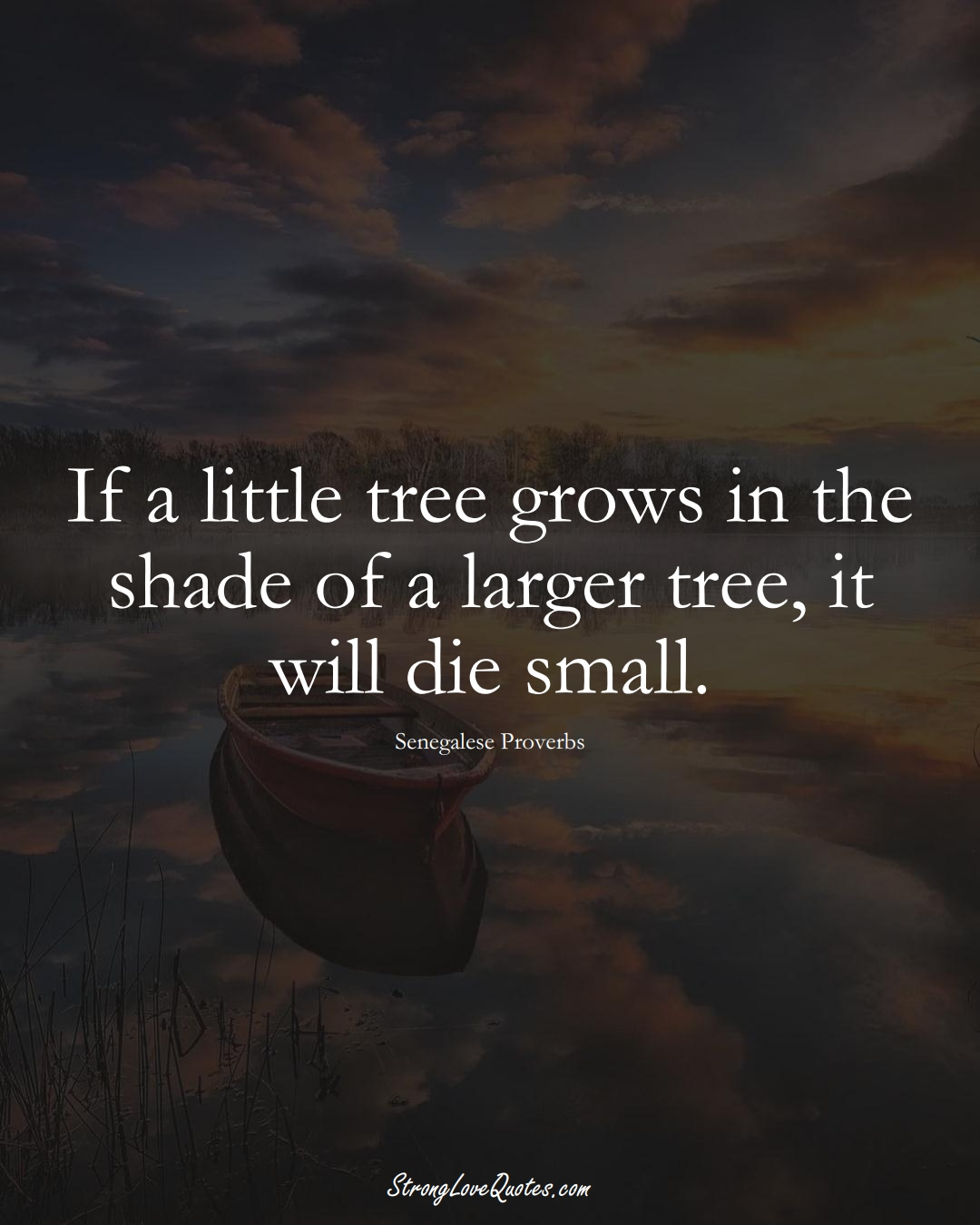 If a little tree grows in the shade of a larger tree, it will die small. (Senegalese Sayings);  #AfricanSayings