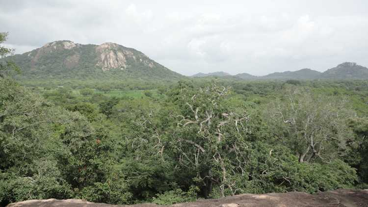 Haththikuchchi Archaeological Site