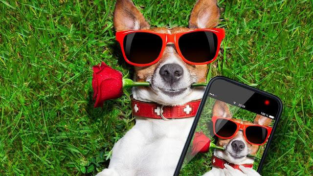 cachorro com oculos escuros segurando um celular