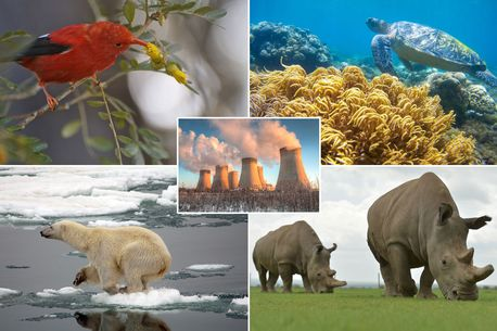 One MILLION types of animal  in danger of extinction because of human movement