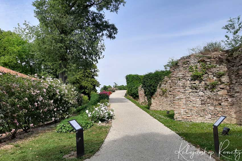 Ogród różany w Padwie