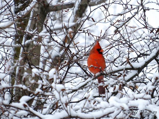 Fen tre sur mes photos d cembre 2015 for Fenetre a cardinal