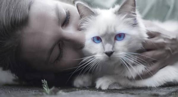 Cuando tienes una conexión espiritual con los gatos