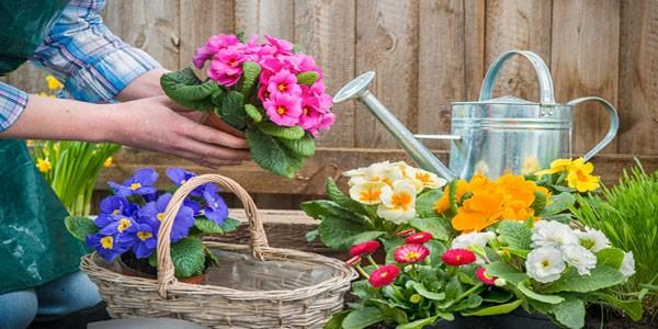 Pfae agroempleo 2 0 la horticultura y la floricultura for Horticultura definicion