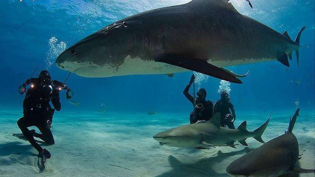 Cueva de los tiburones dormidos