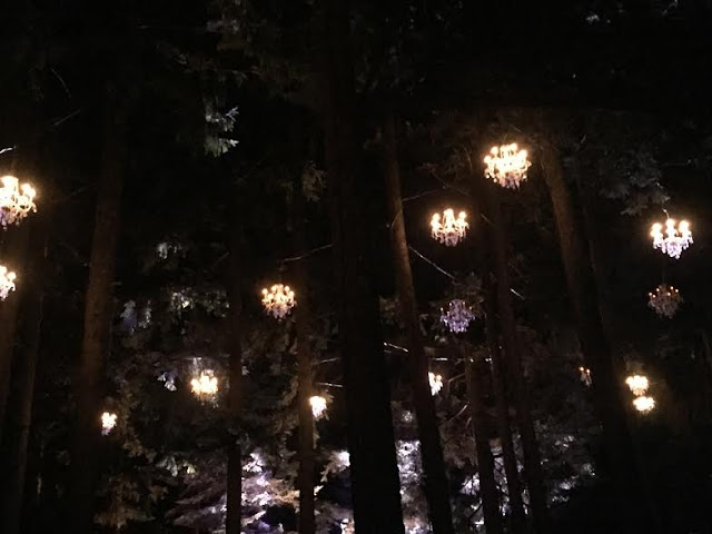 Chandeliers swinging in the trees at Illumination at The Morton Arboretum.