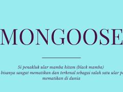 Mongoose, Si Penakluk Ular Mamba Hitam. Ular yang Sangat Mematikan