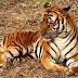 Tigre mata a cuidador en China