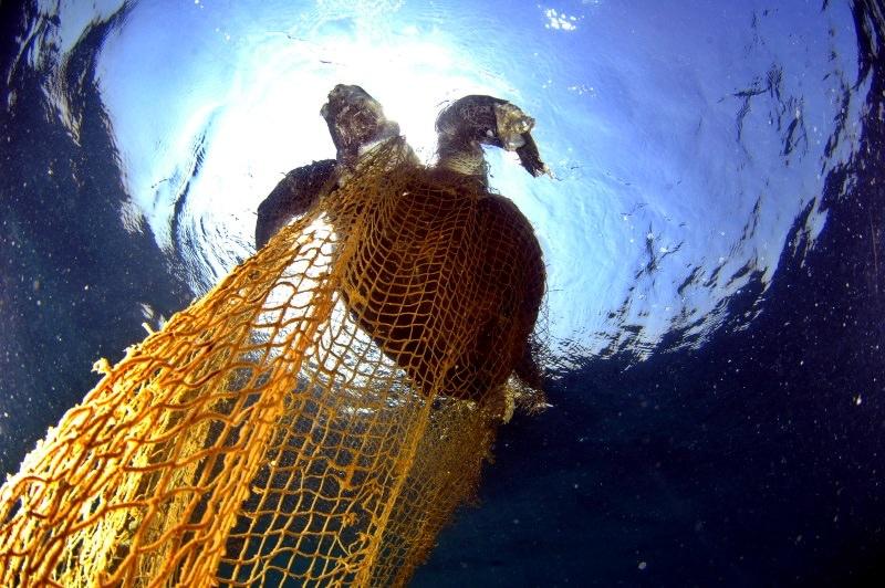 Tartaruga presa numa rede de pesca