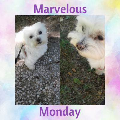 June 4th Edition of Marvelous Monday with Lexi by On My Kindle Book Reviews!