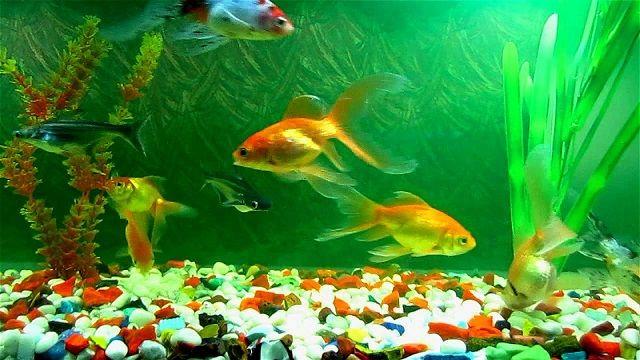 Gambar dan Foto Kualitas Air dan Sistem Air