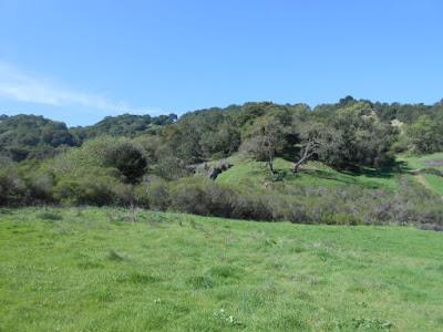 spiritual bliss, spring, California, green rolling hills, blue sky