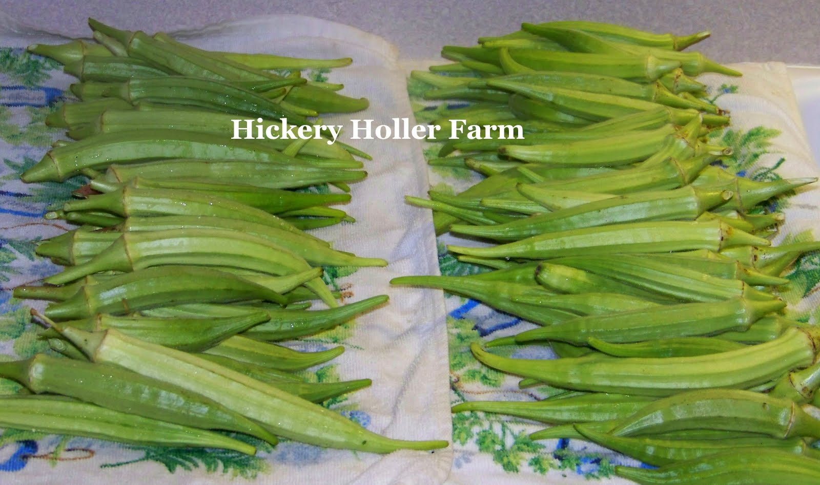Hickery Holler Farm: Nothing Goes To Waste