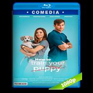 Cómo entrenar a tu marido (2018) HD BDREMUX 1080p Latino