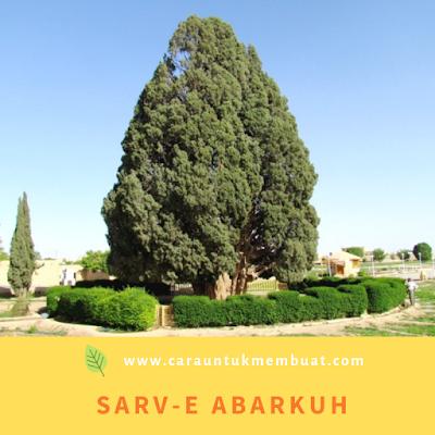 Sarv-e Abarkuh