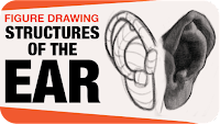 Link to anatomical structures of the ear lesson