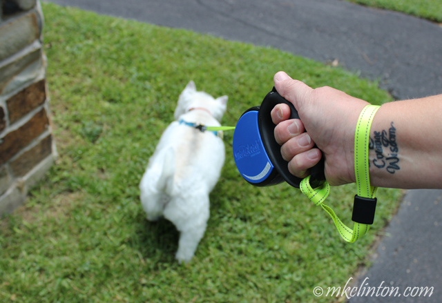 dog on Smart Leash