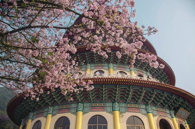 Chùm ảnh đẹp Hoa Anh Đào Nhật Bản vào tháng 02/2020 15