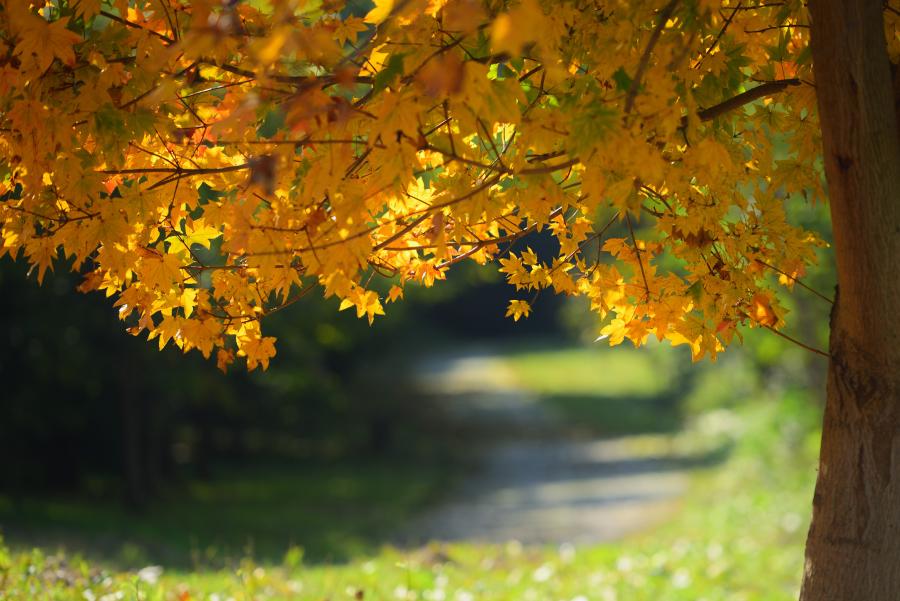 大乗寺丘陵公園の紅葉
