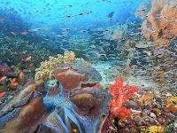 7 Taman Bawah Laut Terindah Di Indonesia Yang Mendunia