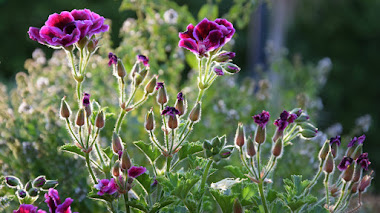 Plantas, jardines y flores que cierran septiembre en mi Instagram