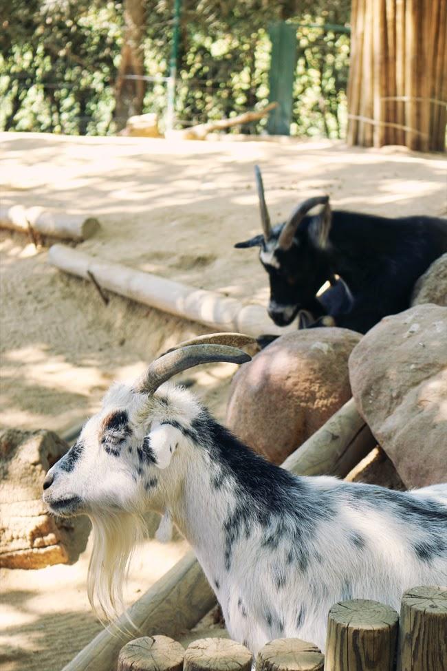 Madrid Tierpark Faunia