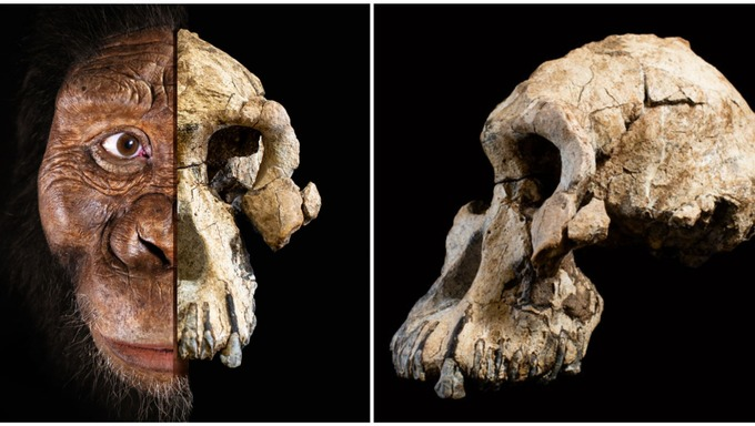 Clues about Human Evolution