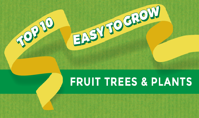 Top 10 Easy To Grow Fruit Trees And Plants #infographic