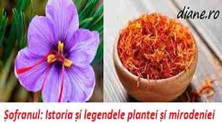 Istorie si legenda floare si mirodenie sofran