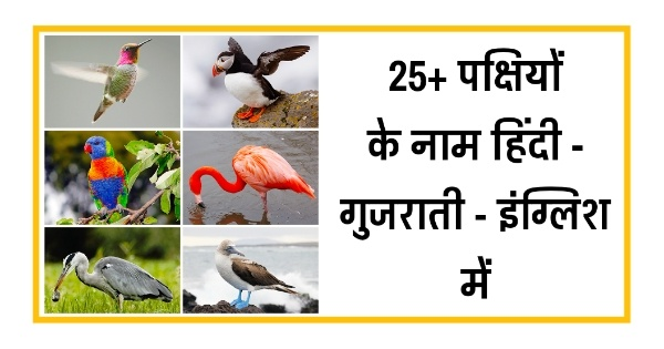 Here is useful list of indian birds name in hindi and in gujarati and in english - पक्षियों के नाम गुजराती में | List of Birds Name HIndi, Gujarati, English.