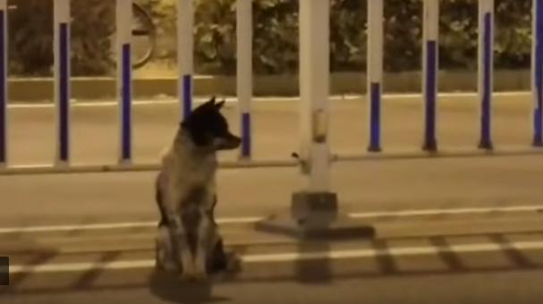 Saat 80 Hari, Anjing Ini Masih Setia Menanti Majikannya di Tempat Dia Terbunuh