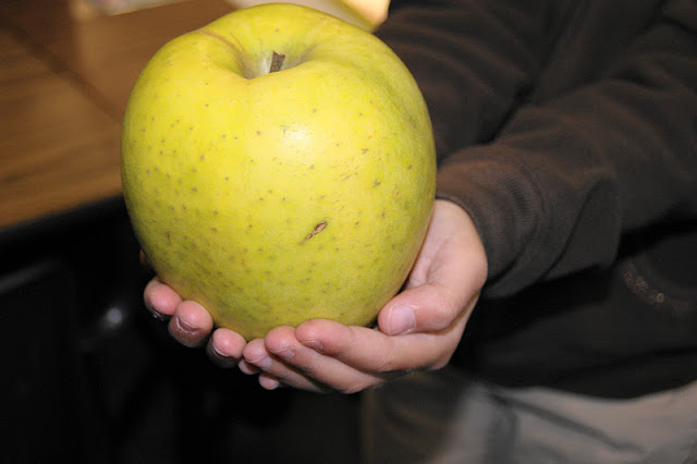Huge Fuji apple image