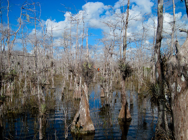 Big Cypress Swamp em Everglades em Miami